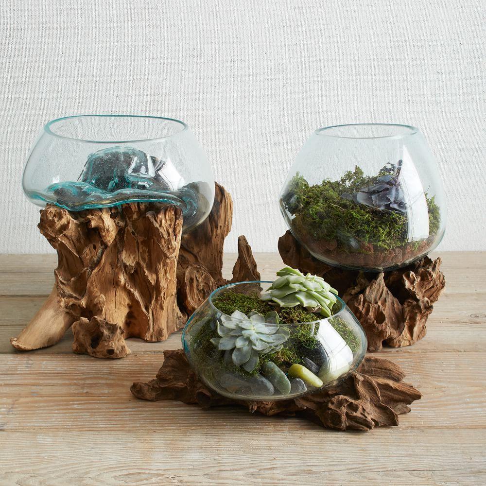 wood glass terrariums west elm uk. Black Bedroom Furniture Sets. Home Design Ideas