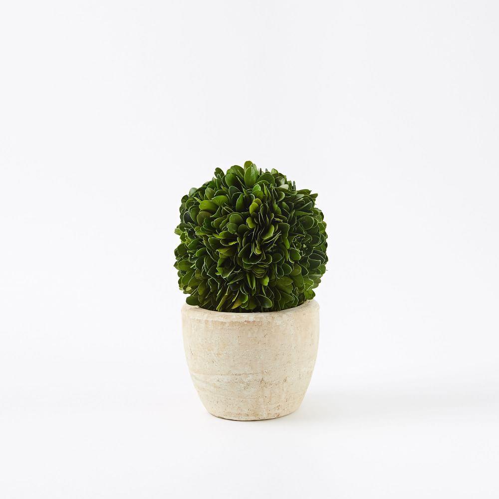 Round Boxwood Trees - Mini