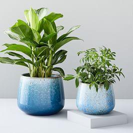 Planters Terrariums West Elm Uk