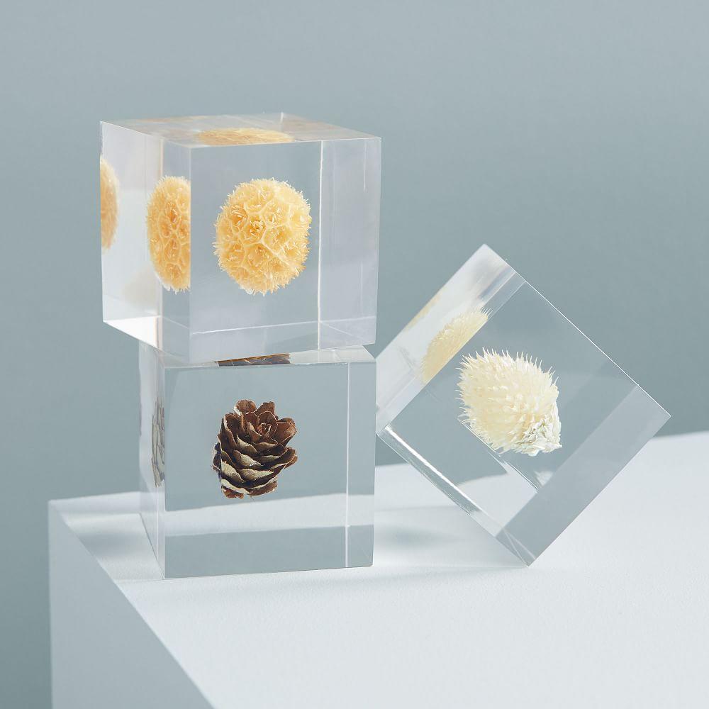 Floating Botanical Objects