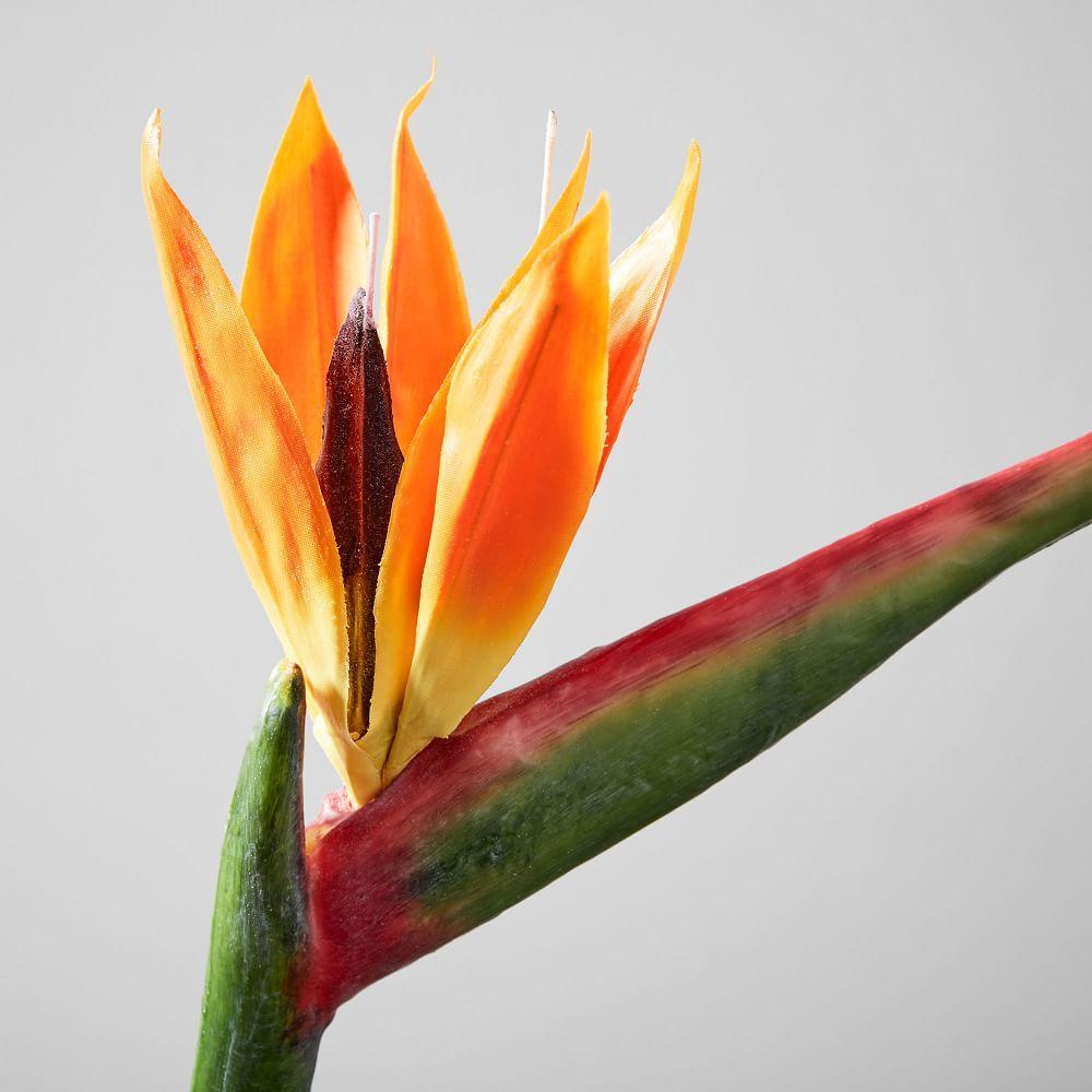 Faux Botanicals - Bird-of-Paradise