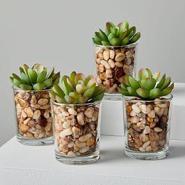 Faux Botanicals - Potted Mini Succulents