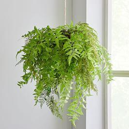 Faux Hanging Fern Plant