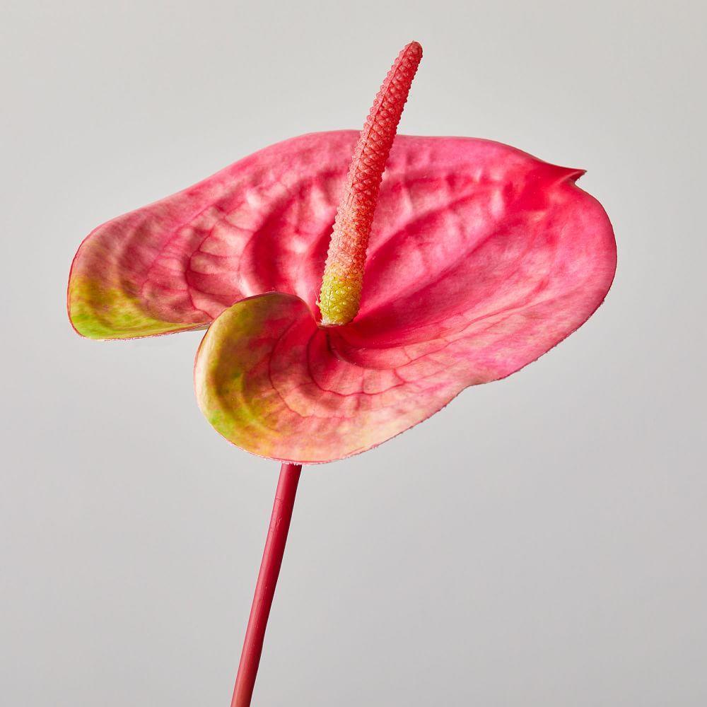 Faux Botanicals - Anthurium