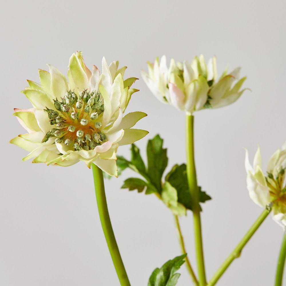 Faux Botanicals - Astrantia