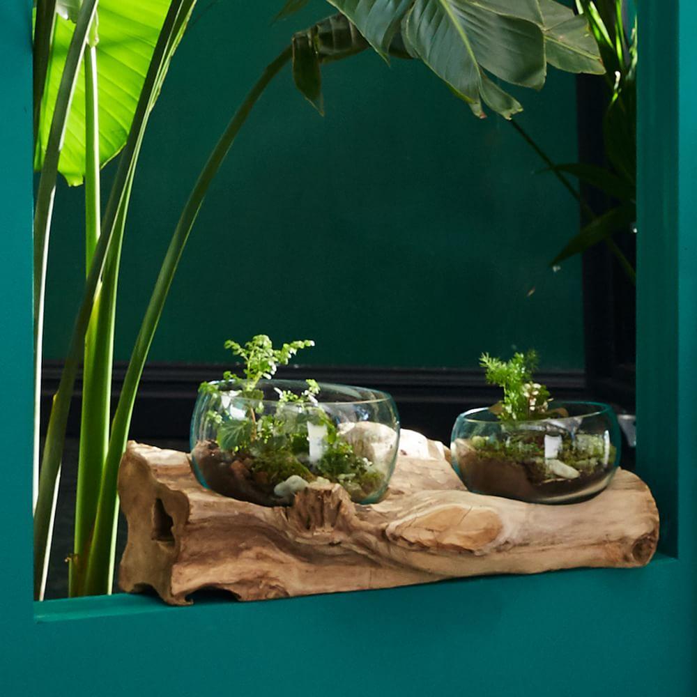 Wood + Glass Terrariums