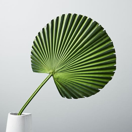 Faux Botanicals - Fan Palm